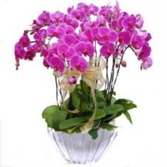 Bembe Orkide 3 lü